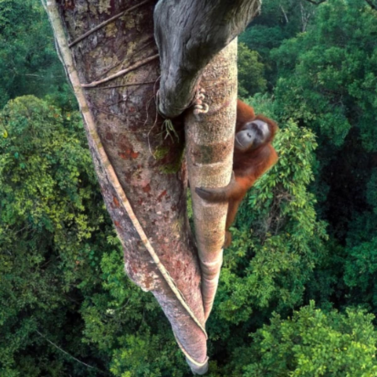 """The Houston Museum of Natural Science presents 52nd """"Wildlife Photographer of the Year"""""""
