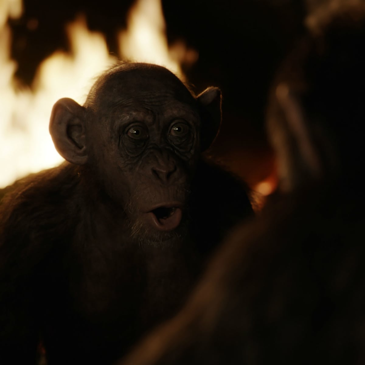 Steve Zahn as Bad Ape in War for the Planet of the Apes