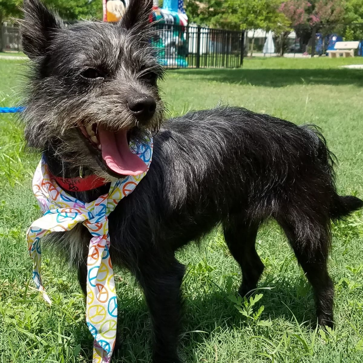 Sasha Pethouse Pet of the Week Citizens for Animal Protection