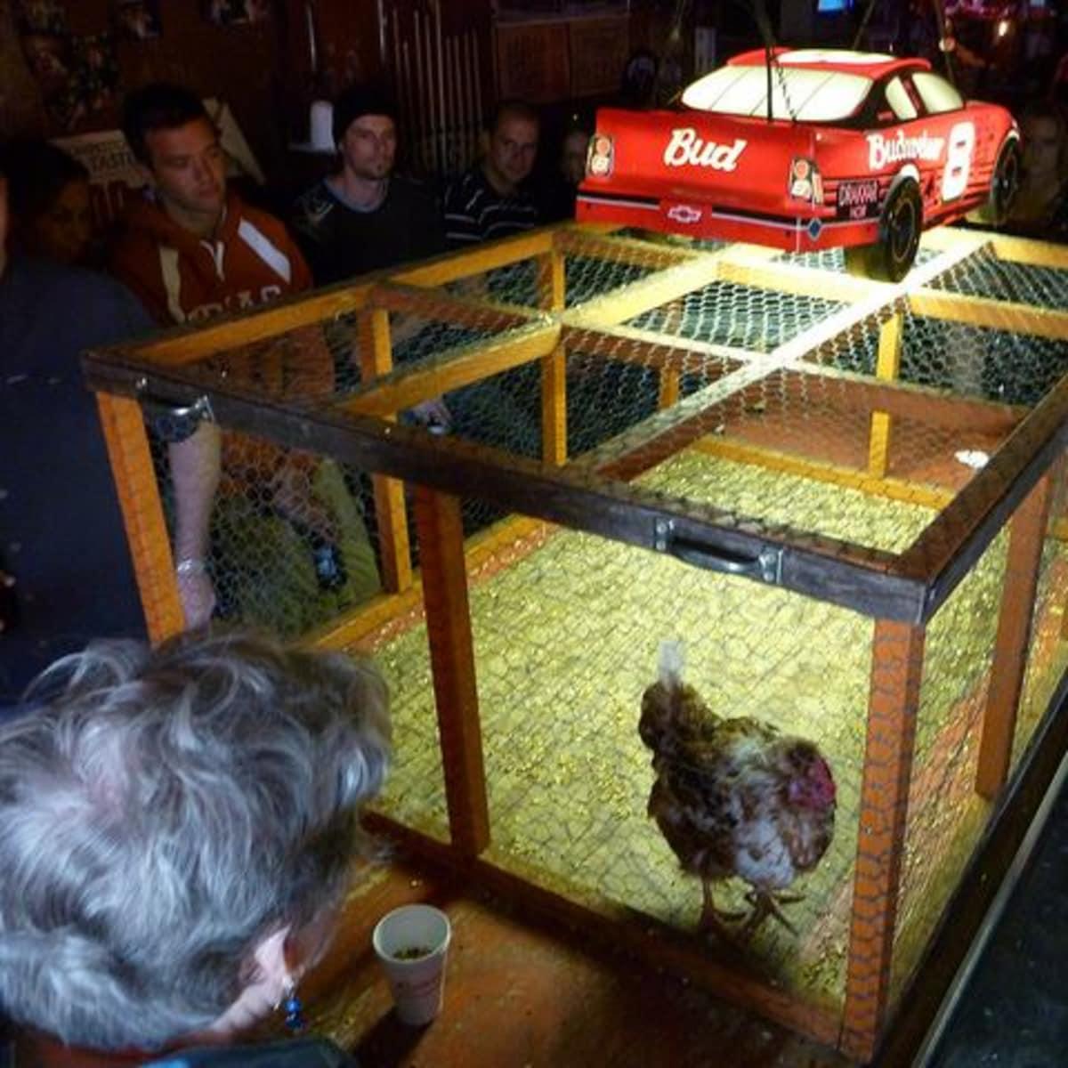 Ginnys Little Longhorn Saloon Chicken Shit Bingo