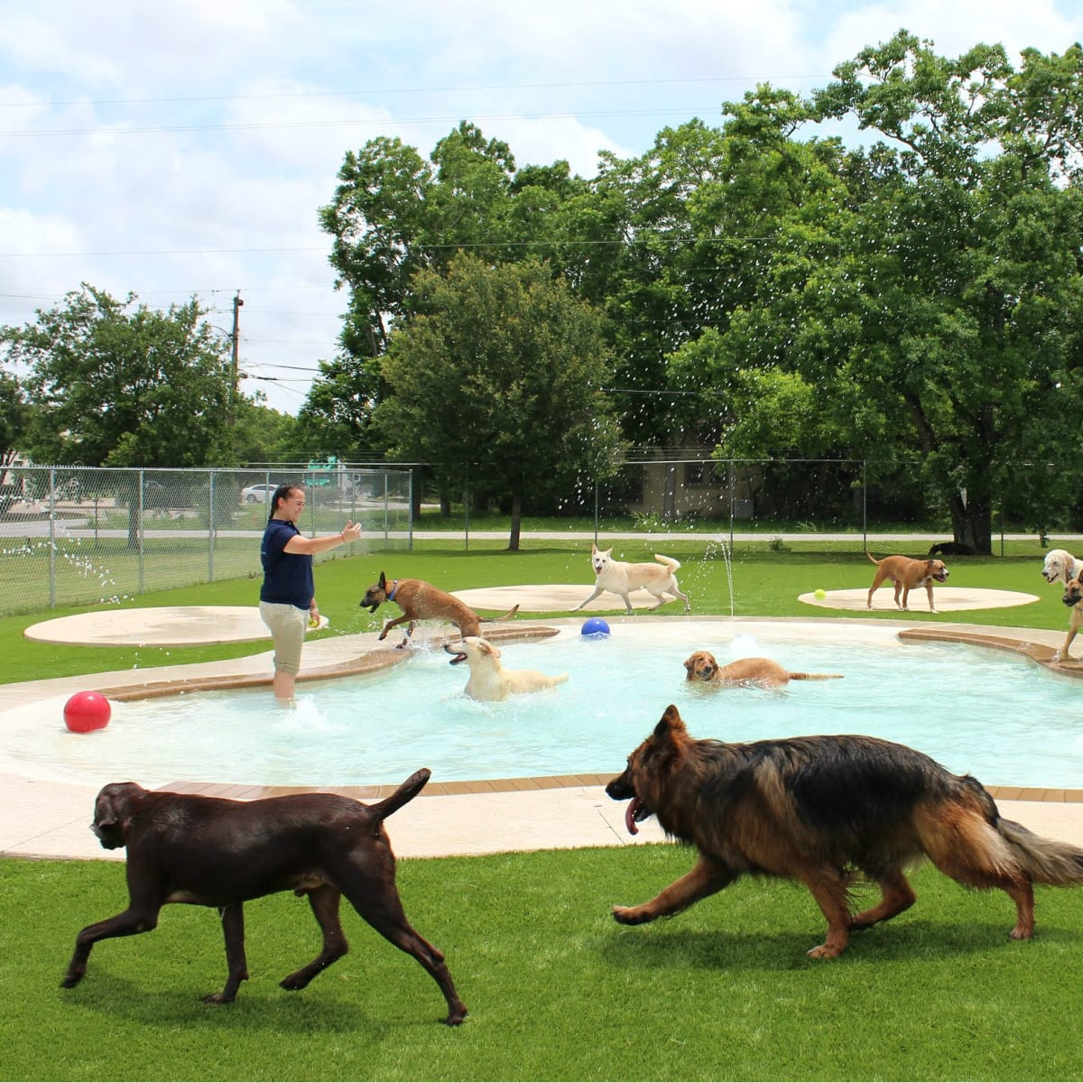 Oodles of Doodles Meadowlake Pet Resort dog pool