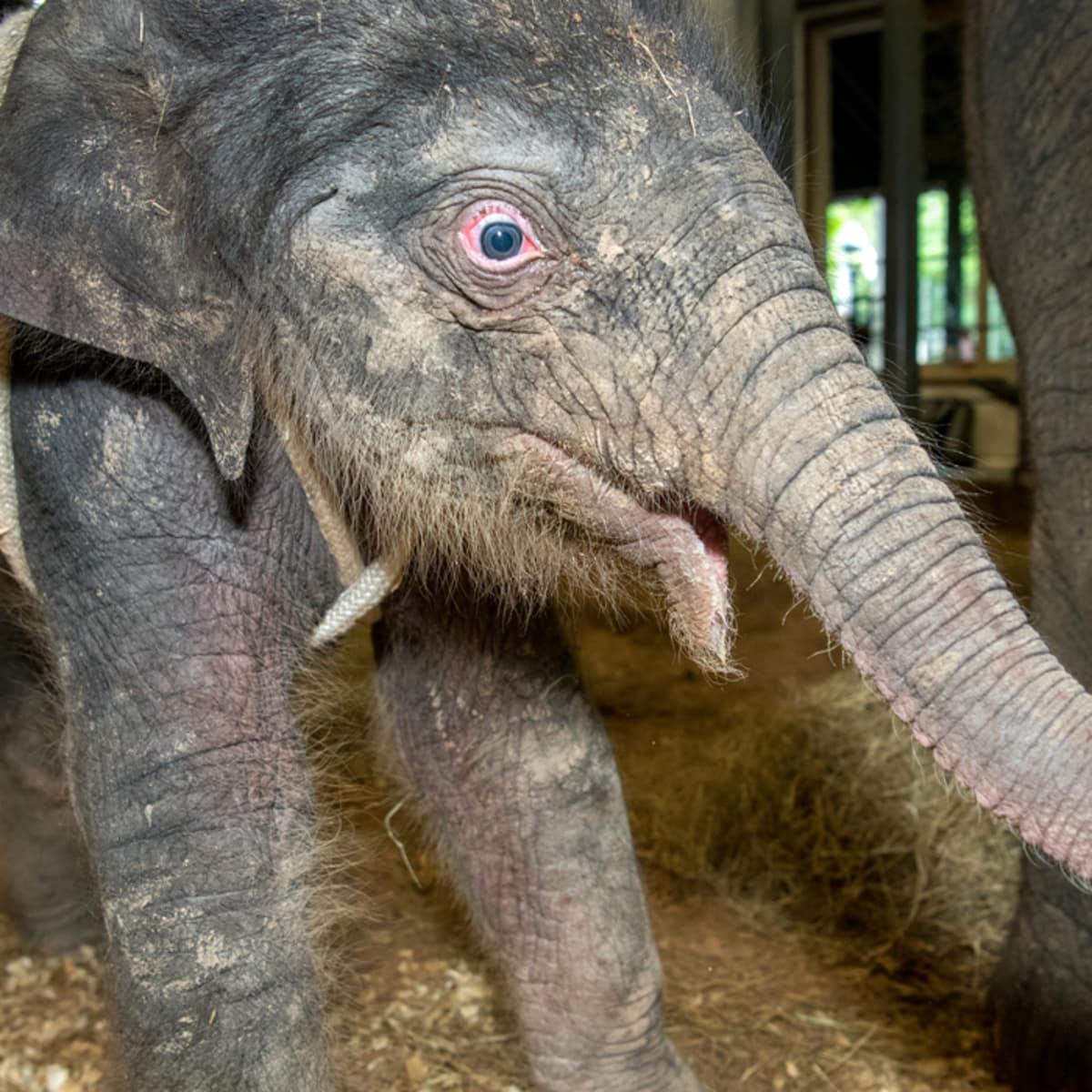 Houston Zoo baby elephant Tilly Tess