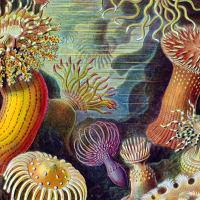 Musiqa presents Light, Land, and Sea