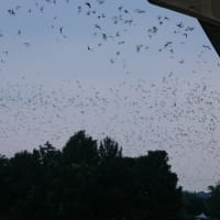 Roadway Productions presents 12th Annual Bat Fest