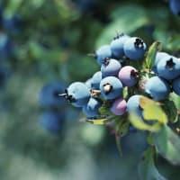 Farmers Market Fruit Tree Sale