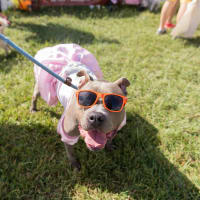 Best Friends Animal Society presents 2017 Strut Your Mutt 5K