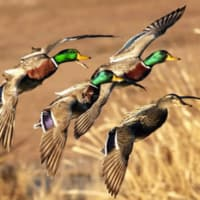 2017 Fort Worth Ducks Unlimited Fall Banquet
