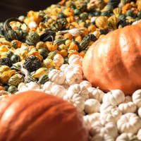 NorthPark Center presents Pumpkin Patch