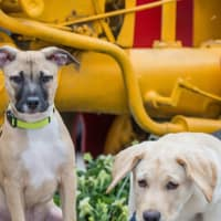 Dallas Farmers Market presents Canines & Cool Jazz