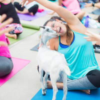 Dallas Farmers Market presents Rescue Goat Yoga