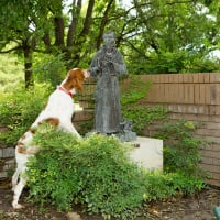 Lena Pope presents Blessing of the Animals