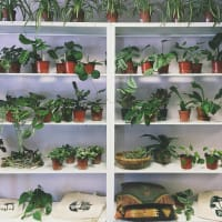 The Fox Den plants houseplants