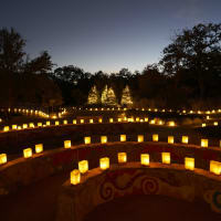 Lady Bird Johnson Wildflower Center - Luminations