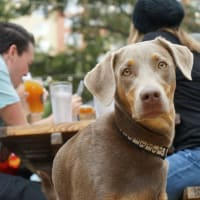Mega Mutt Monday & Hopslam Ale Release Party