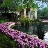 Flower Power: A Meditative Walk in the Garden