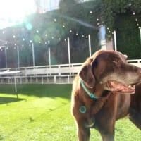 Parlor & Yard, dog