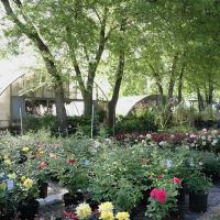 It's About Thyme Garden Center Austin