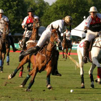 Places-Unique-Houston Polo Club-action-1
