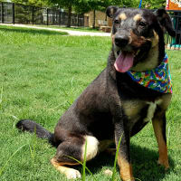 Pet of the Week- Sheila Hoffman Aussie