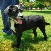 Pet of the Week - Chong puppy