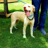Pet of the Week - Zydeco