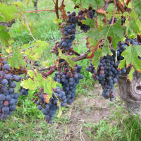 Dallas Uncorked presents Harvest Dinner with Amici Cellars