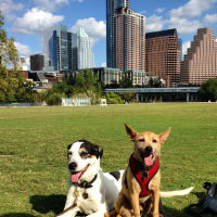 Dog dogs Austin skyline