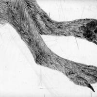 Bale Creek Gallery presents Kiki Smith: Bounty