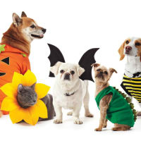 Pet Parade and Costume Contest