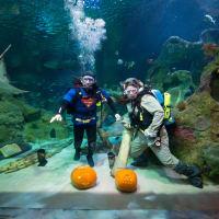 Underwater Pumpkin Carve-Off