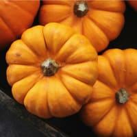 Pumpkin Patch Pop-Up