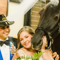 Blackmon White wedding horse