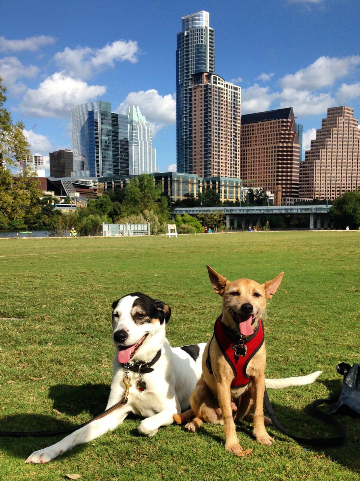 Dog dogs Austin skyline