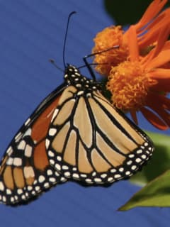 Texas Discovery Gardens presents Fascinating World of Butterflies