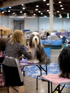 Reliant Park World Series of Dog Shows