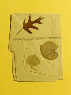 Moody Gallery opening reception: Some Truths to Learn from Leaves by Elinor Evans