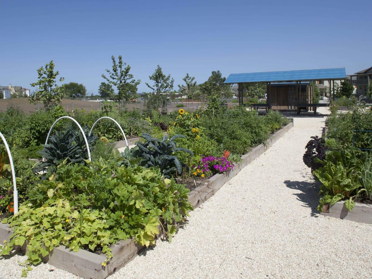 John Gaines Park Mueller Austin community garden