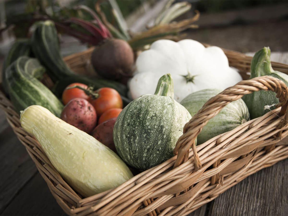 Fresh-picked garden produce