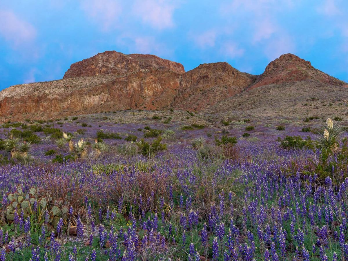 Big Bend Ranch State Park Texas Parks and Wildlife