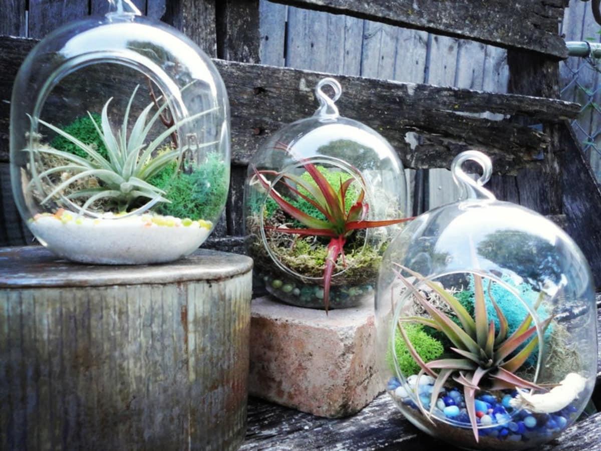 Flower Child terrariums