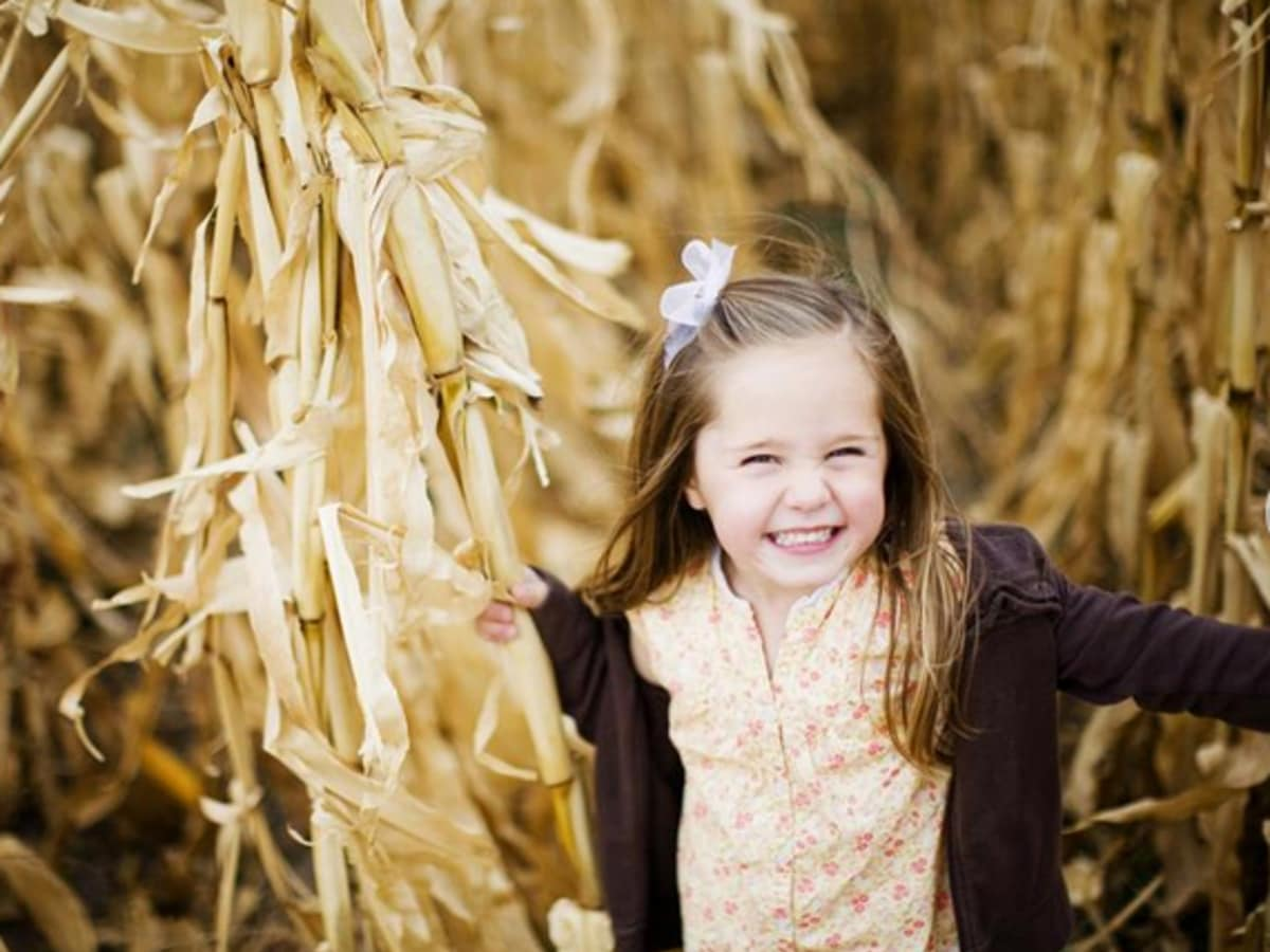 Barton Hill Farms Corn Maze