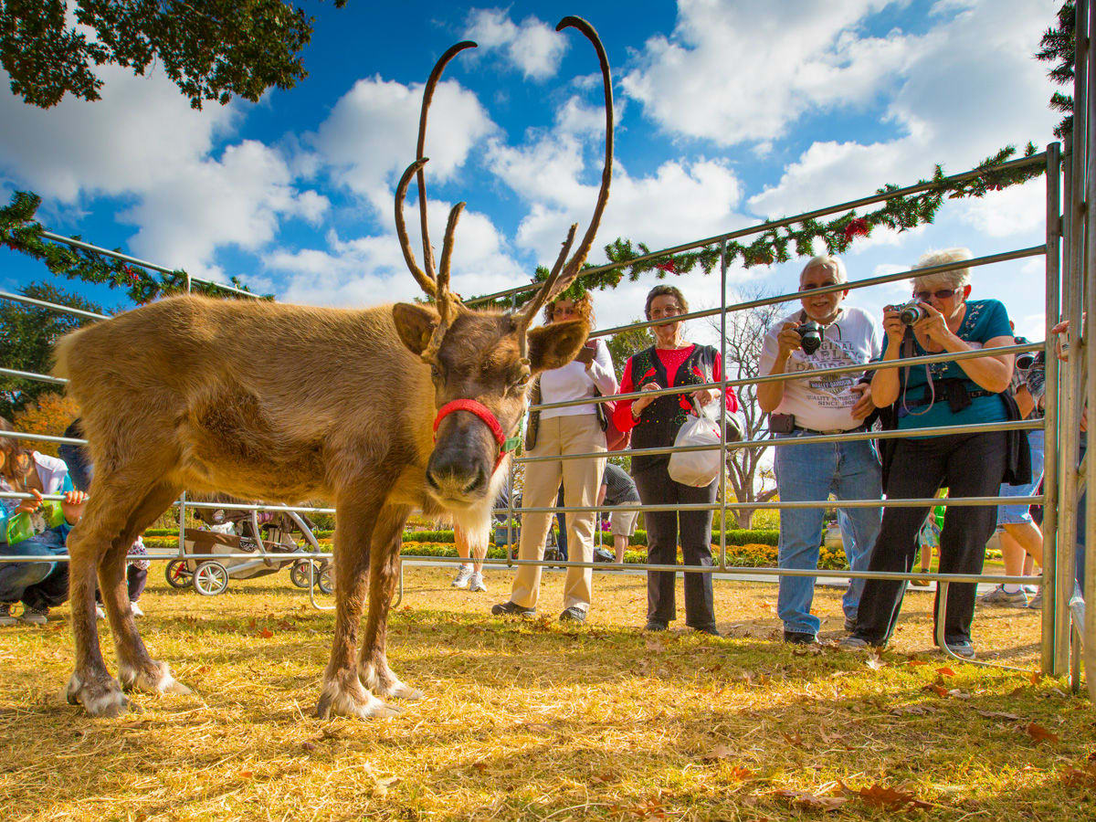 Reindeer at Holiday at the Arboretum