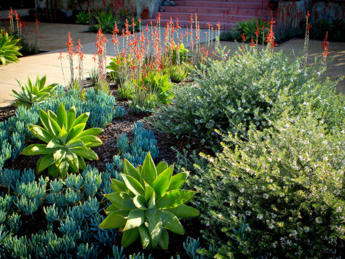 Houzz garden design 6