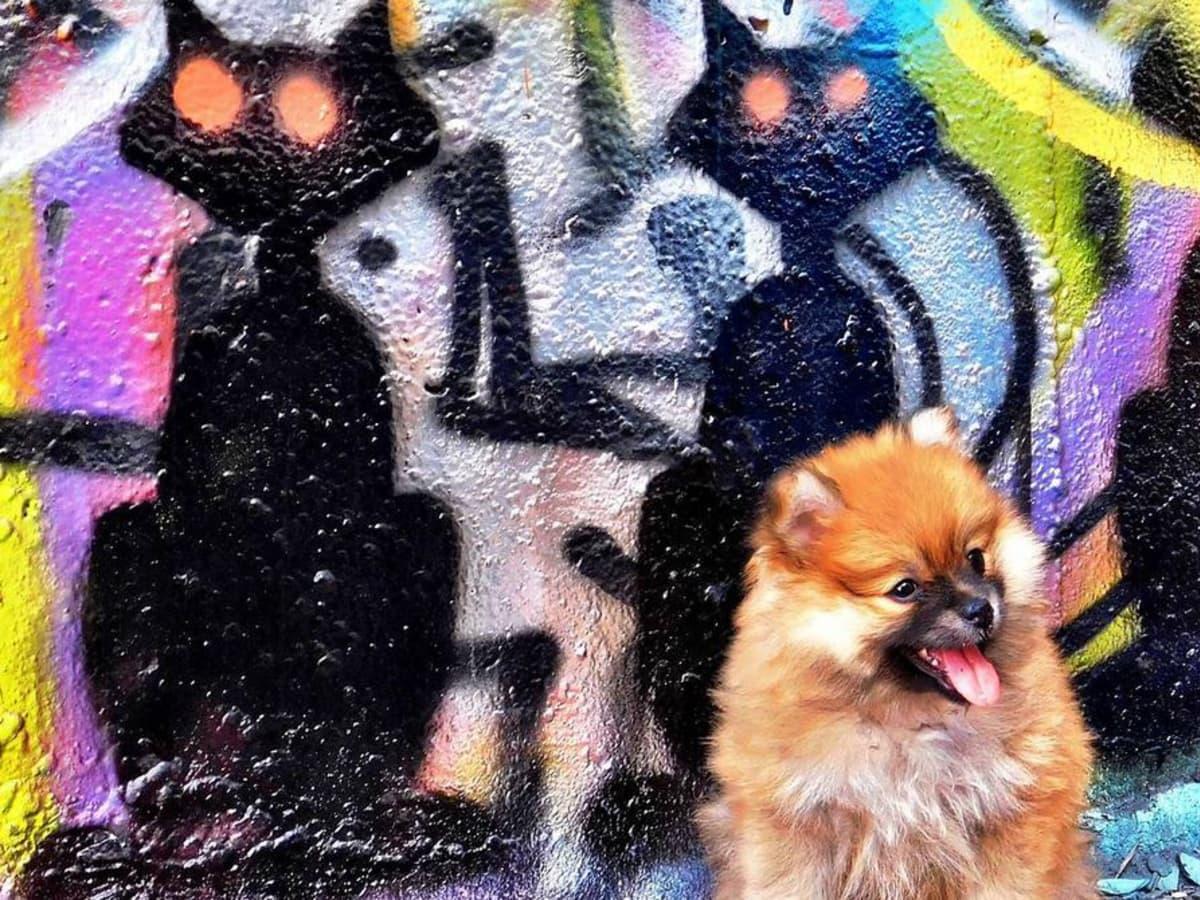 Know ATX Instagram account puppy Austin graffiti Castle Park
