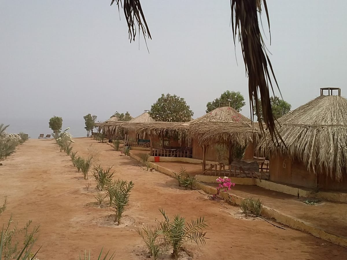 Newly planted palm trees at Bedouin Star Sinai Egypt