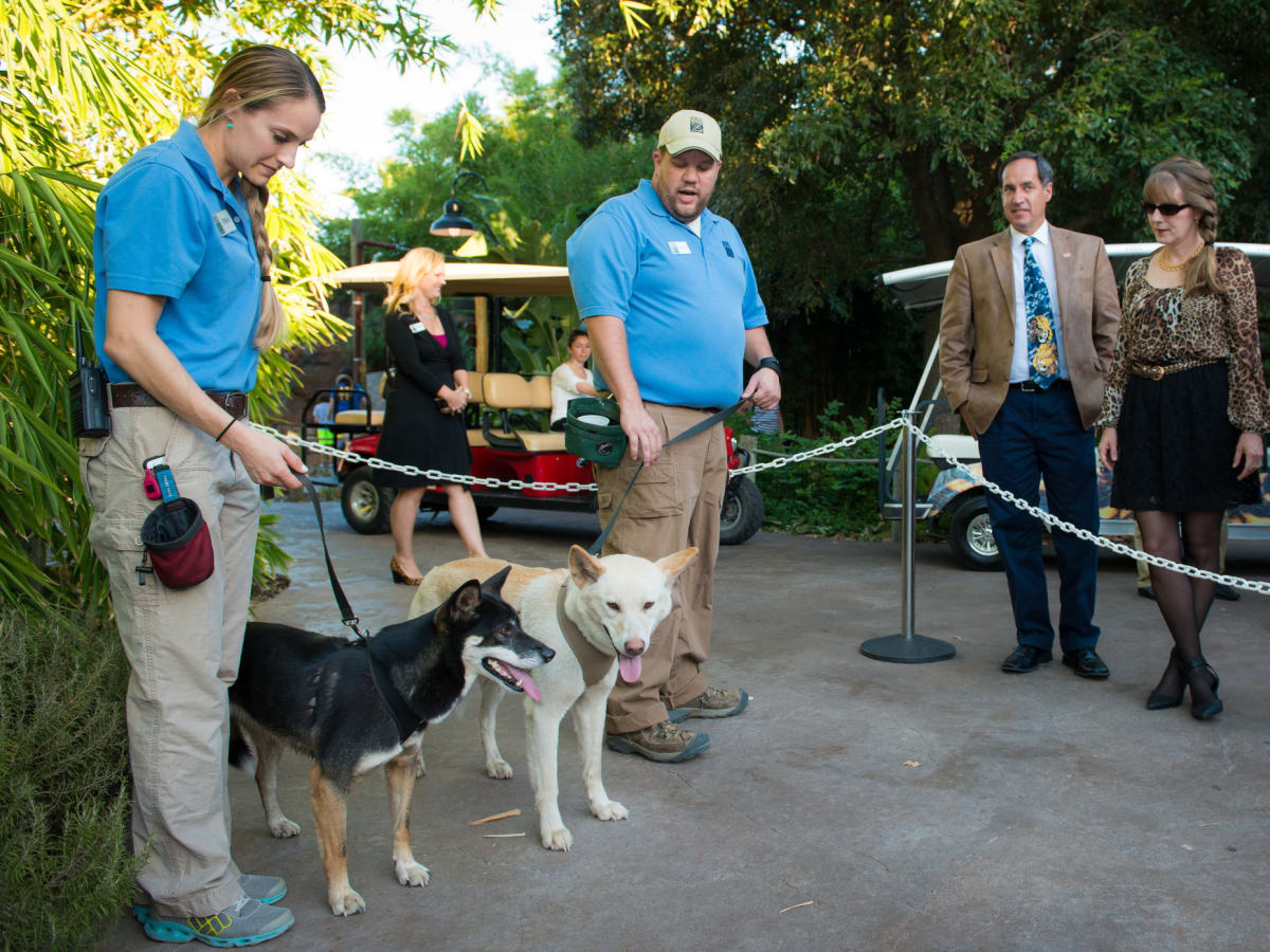 Houston Zoo Conservation Gala 2015 Dingos with Guests