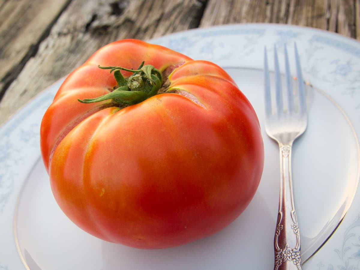 Photo of huge, slicing tomato
