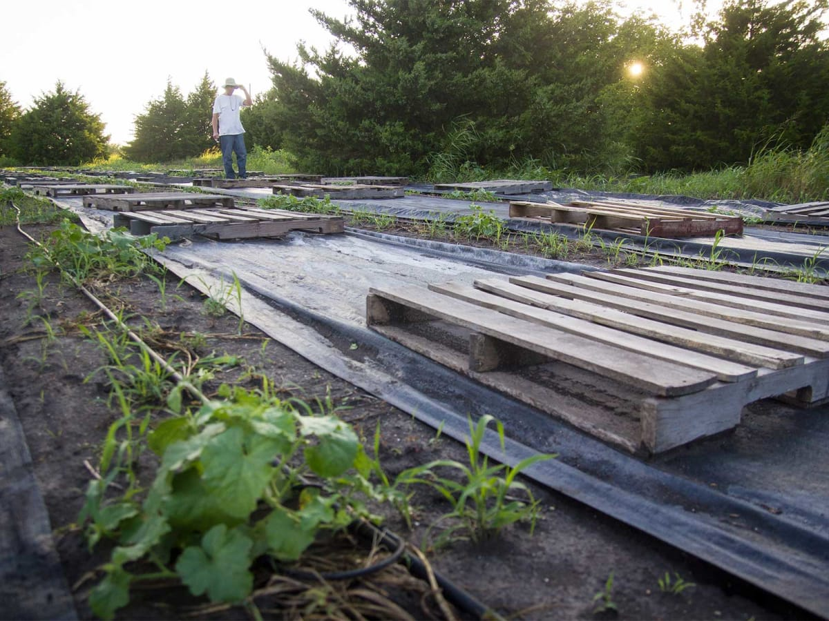 Photo of Marshall Hinsley among pallets and melon vines