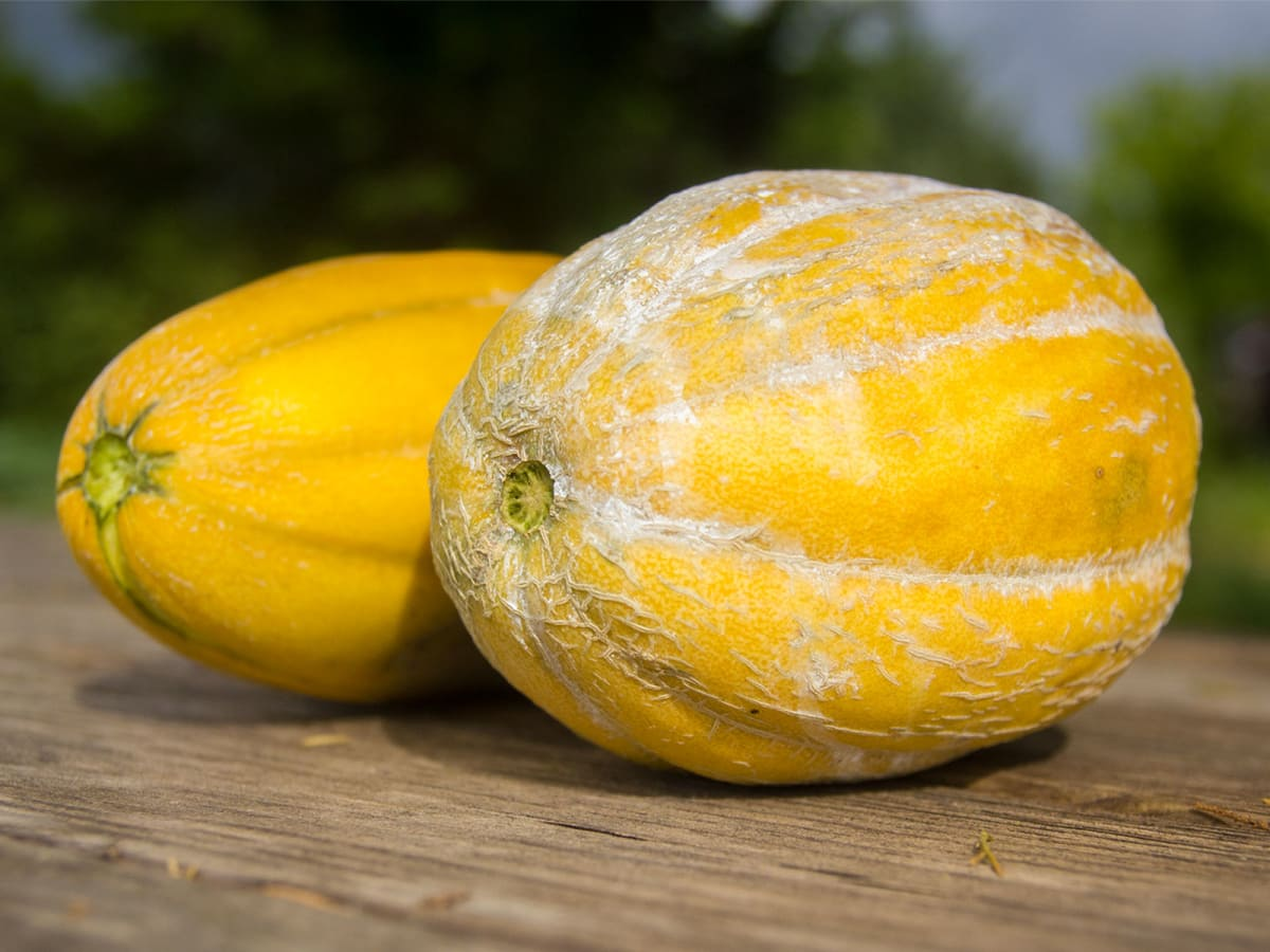 Photo of ripe melons of wooden table