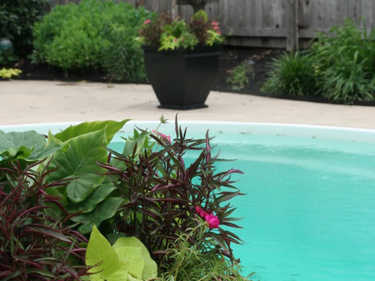 8 easy container garden plants to grow on a budget - CultureMap Austin